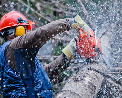 How as regularly as conceivable do you require a tree trimming service?